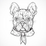 French Bulldog. Vintage black and white hand drawn vector illustration Stock Image