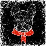 French Bulldog. Vintage black and white hand drawn vector illustration in sketch style Royalty Free Stock Images