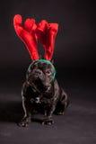 French bulldog wearing antler Stock Photos