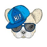 French bulldog wearing a cap and sunglasses. Cute puppy. Vector illustration for a card or poster. Stock Photo