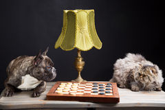 French bulldogplaying checkers with persian cat on black Stock Images