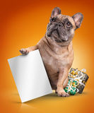 French bulldogs with white board and christmas gifts Stock Images