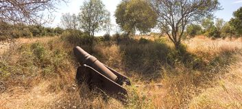 French cannon destroyed by senegal soldiers in French Army in 1915 gallipoli campaign. The cannon is in the midde of a old sunflow Royalty Free Stock Image