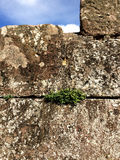 French castle wall with plants Stock Photos