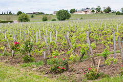 French Chateau in Saint-Emilion Stock Image