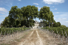 French chateau and vines Stock Photography