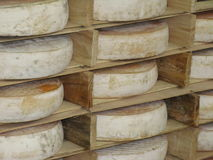 French cheese called Saint-Nectaire Stock Photography