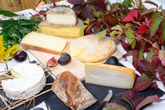 French cheese platter Stock Photography