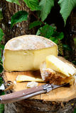 French cheeses Savoie Royalty Free Stock Photos