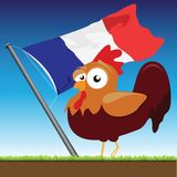French Cock Stock Photo
