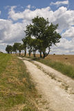 French country lane. Tree lined country road in the Dordogne, South West France Stock Photos