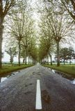 French country road. French side road with no traffic and the usual trees along the side. These are quickly dissapearing stock images