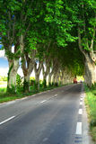French country road Stock Images
