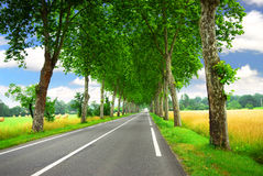 French country road Royalty Free Stock Image