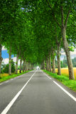 French country road. Country road lined with sycamore trees in southern France Royalty Free Stock Photos