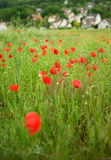 French countryside with blossoming poppies Royalty Free Stock Photography