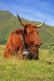 French cow. Peaceful cow with mountains in background Royalty Free Stock Photography