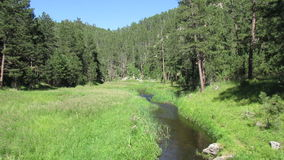 French Creek in the Black Hills of South Dakota stock video footage