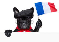 French dog Royalty Free Stock Photos