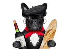 French dog. French bulldog with red wine and baguette and french hat Royalty Free Stock Photos