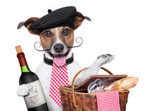 French dog Stock Image