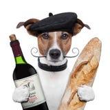 French dog wine baguete beret stock image