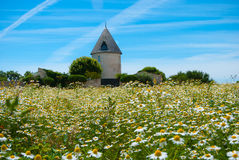 French farmhouse in chamomile field Royalty Free Stock Photo