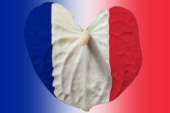 French emblem on a flower. stock photos
