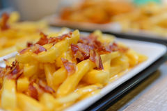 French fries and cheese with bacon on top  in white bowl Royalty Free Stock Images