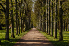 French garden in Celle. A photograph of an alley of linden trees in the French Garden (Französischer Garten) in Celle, Germany Stock Photography