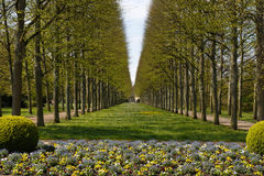 French garden in Celle. A photograph of an alley of linden trees in the French Garden (Französischer Garten) in Celle, Germany Royalty Free Stock Image
