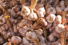 French garlic Stock Images