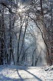Fontainebleau forest path under snow Royalty Free Stock Photos