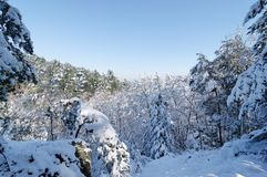 Fontainebleau forest under snow Royalty Free Stock Images