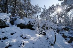 Fontainebleau forest under snow Stock Image