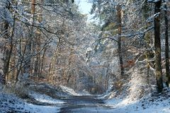 Frozen road in Fontainebleau forest Stock Photography