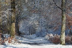 Frozen road in Fontainebleau forest Stock Images