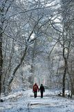 Winter walk in Fontainebleau forest path Stock Image