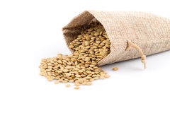 French green lentils in sack Stock Image