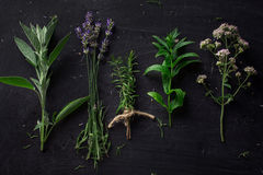French herbs on the black desk Stock Image