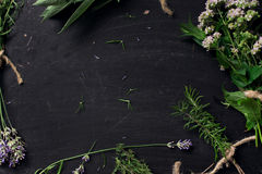 French herbs on the black desk Royalty Free Stock Image