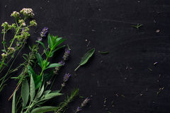French herbs on the black desk Stock Photo