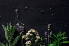 French herbs on the black desk Royalty Free Stock Images