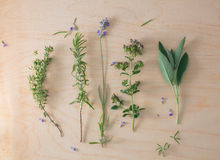 French herbs desk Royalty Free Stock Photos