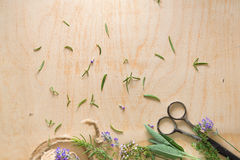 French herbs on wood Stock Photo