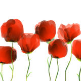 Tulips pattern. Red tulips on white background Royalty Free Stock Photos