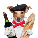 Dog  wine baguette beret Royalty Free Stock Photo