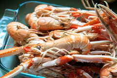 French langoustines Stock Photos