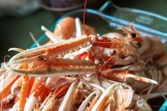 French langoustines Royalty Free Stock Photo