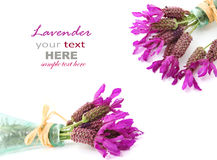 French lavender Stock Photos
